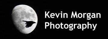 Kevin Morgan Photography